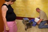Les risques de la cohabitation entre un chat et un bébé