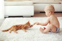 Comment présenter son bébé au chat ?