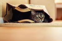 Quand installer le chat dans le nouveau logement ?