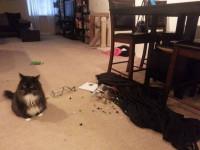 Les différents types de comportement destructif du chat