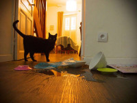 Quelles sont les causes des comportements destructeurs des chats ?