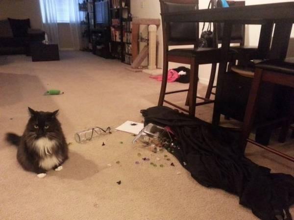 Chat qui d truit tout le comportement destructeur des chats - Comment empecher un chat de gratter a la porte ...