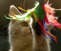 Pourquoi stimuler mentalement un chat?