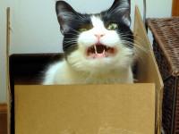 Quelles sont les causes de la dépression chez le chat  ?
