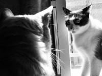 Les raisons et sources du stress chez le chat