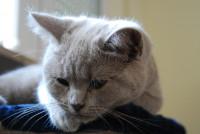 Les troubles du comportement du chat pouvant être causés par le décès de son maître