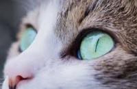 Comment aider le chat à surmonter le décès de son maître