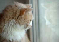 Quand s'inquiéter pour un chat lors du décès de son propriétaire