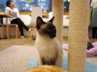 Les avantages et les inconvénients des cafés à chats