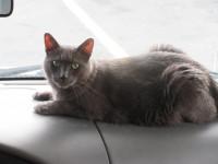 Comment améliorer les conditions de voyage de votre chat ?