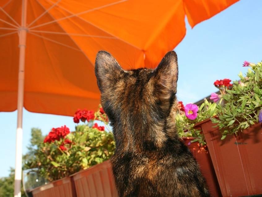 comment prot ger son chat des dangers li s la chaleur et au soleil. Black Bedroom Furniture Sets. Home Design Ideas