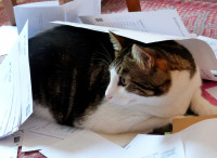 Les renseignements à obtenir avant de partir en vacances avec son chat