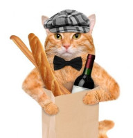 Les formalités de base pour voyager avec son chat