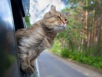 Préparer son voyage à l'étranger avec son chat