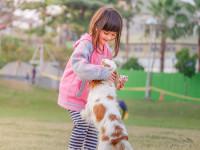 Les raisons des allergies aux animaux