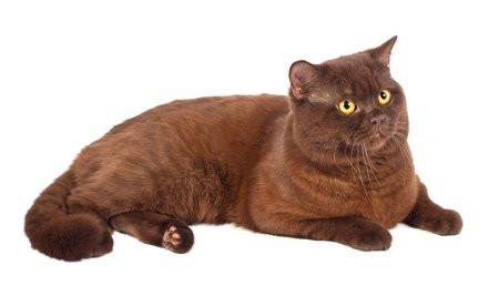 couleurs et robes des chats. Black Bedroom Furniture Sets. Home Design Ideas
