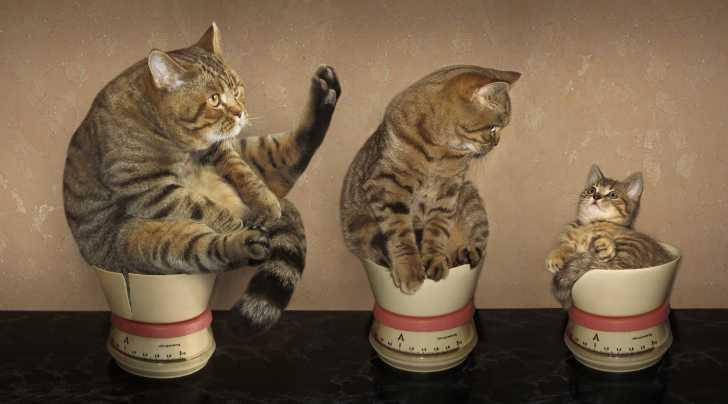 La croissance d'un chaton, de la naissance à l'âge adulte
