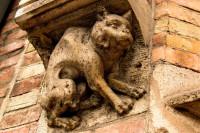 Le chat au Moyen-Âge : un statut diabolisé