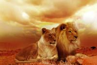 Quel félin est le lion ?
