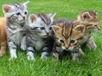 Les personnes autorisées à la vente de chats et les lieux de cession