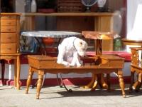 Le chien ou le chat dans le régime de séparation de biens