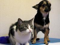 La garde du chien ou du chat, un enjeu de taille lors d'une séparation