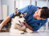 Qu'est ce que le métier de vétérinaire ?