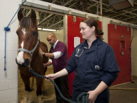 Le vétérinaire pour animaux d'élevage