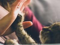 Quand consulter un comportementaliste ?