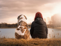 Comment choisir un comportementaliste félin ou canin ?