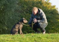 La cohabitation entre l'être humain, les chiens et les chats