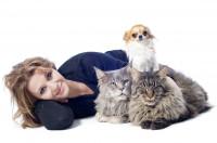 Qu'est-ce qu'un comportementaliste pour chiens ou chats ?
