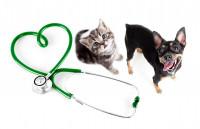 Habituer son chien et son chat à être manipulé