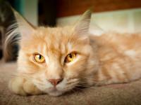 Qu'est ce que l'arthrose du chat ?
