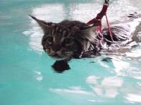 Peut-on soigner l'arthrose du chat ?