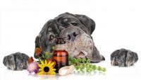 L'homéopathie vétérinaire
