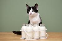 Donner du lait à son chat : bonne ou mauvaise idée ?