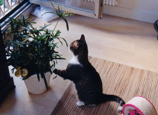 les plantes toxiques et nocives pour le chat. Black Bedroom Furniture Sets. Home Design Ideas