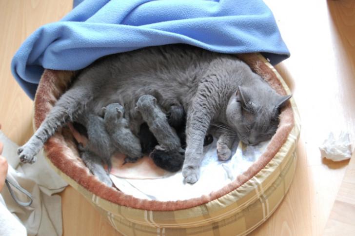 big sur chat Découvrez big white m single malt à -139€ sur achat-skicom.