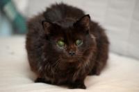 Les changements physiologiques chez le chat âgé