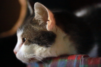 La santé du chat âgé