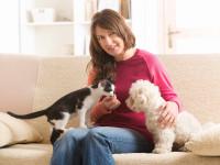Se préparer à la maladie du chien et du chat