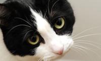 Les aspects juridiques et éthiques de l'euthanasie d'un chat