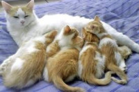 La stérilisation des chats : un acte responsable et protecteur.