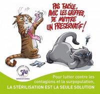 Avantages et inconvénients de la stérilisation des chats