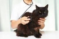 La prévention et le traitement de l'incontinence du chat âgé