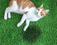 Les causes de l'incontinence chez le chat