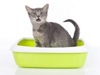 Qu'est ce que la cystite du chat ?