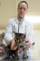 Le diagnostic de la pyodermite chez le chat