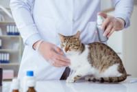 Peut-on prévenir la pyodermite chez le chat ?